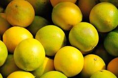 Citrus sinensis Royalty Free Stock Image