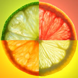 Citrus slice. Composed of four  images: lime, lemon, grapefruit and mandarin. See more citrus images in this series in my portfolio royalty free stock images