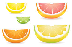 Citrus slice variety. A selection of citrus fruit slices in proportional sizes. Illustrated are lemon, lime, orange, pink grapefruit and pomelo fruit Royalty Free Stock Photos