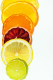 Citrus Slices. A row of various types of citrus fruits stock photo