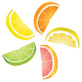 Citrus slices. A selection of citrus fruit slices arranged into a revolving shape. Illustrated are lemon, lime, orange, pink grapefruit and pomelo fruit Stock Image