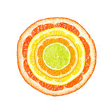 Citrus slices. In four colors and sizes isolated on white background royalty free stock image