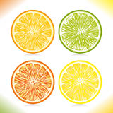 Citrus slices. Stock Photos
