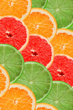 Citrus slices background Stock Photography