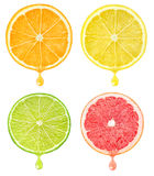 Citrus slices with drop of juice royalty free stock images