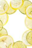 Citrus slices fresh fruit background Royalty Free Stock Photo