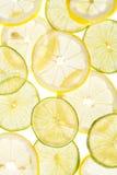 Citrus slices fresh fruit background Royalty Free Stock Images
