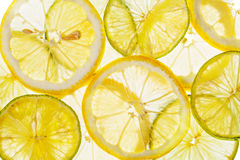 Citrus slices fresh fruit background Stock Image