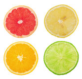 Citrus slices Stock Photography