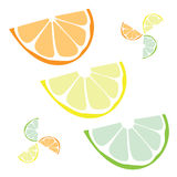 Citrus Slices Vector Royalty Free Stock Image