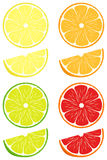 Citrus slices vector set Stock Image
