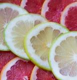 Citrus in the snow Stock Photo