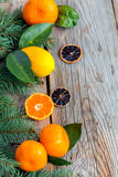 Citrus and spruce branches. Stock Photo