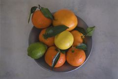 Citrus still life on limestone royalty free stock images