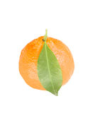 citrus tangerine Arkivbilder