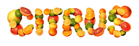 Citrus stock illustration