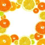 citrus tło Obrazy Stock
