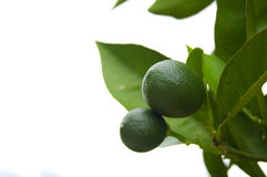 Citrus tree Stock Images
