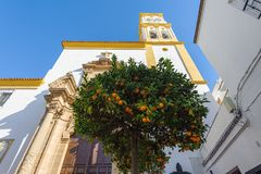 Citrus tree with oranges and church on a background. Marbella, Spain.  stock photo