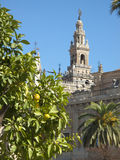 Citrus tree and ornate cathedral, Seville, Spain Royalty Free Stock Images
