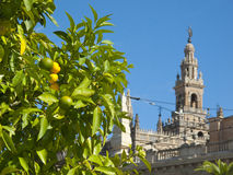 Citrus tree and ornate cathedral, Seville, Spain Royalty Free Stock Photography