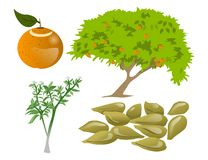 Citrus trees. Trees and seeds and leaves