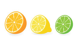 Citrus vector collection Royalty Free Stock Images