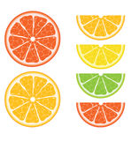 Citrus vector collection Stock Image
