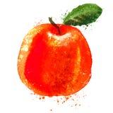 Citrus vector logo design template. fruit or food Stock Images