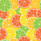 Citrus vector  seamless Royalty Free Stock Photography