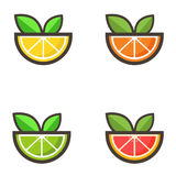 Citrus vector set Stock Photo