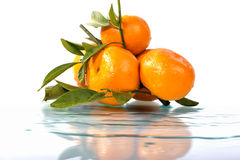 Citrus,  on a white background. Royalty Free Stock Image