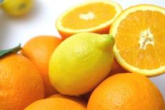citrusa detaljer mig Arkivbild
