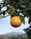 citrusa etna royaltyfri fotografi