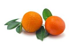 Apelsiner på en vitbakgrund Royaltyfri Foto