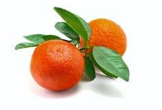 Apelsiner på en vitbakgrund Arkivbilder