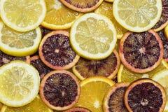 Citrusa mogna saftiga skivor för bakgrund av den orange citronen Fotografering för Bildbyråer