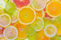 citrusa nya frukter Royaltyfri Bild