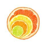 citrusa skivor Arkivfoto