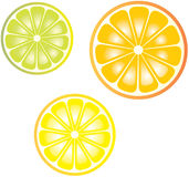 Citruses. A  illustration of lemon, orange and lime Royalty Free Stock Photos