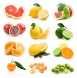 Citruses Royalty Free Stock Photos