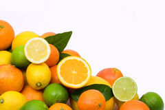 Citruses Stock Photo