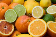 Citruses royalty free stock photos