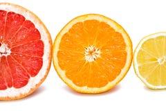 Citruses Stock Photo