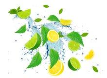 Citrusfärgstänk Fotografering för Bildbyråer