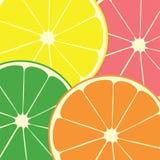 citrusfrukt stock illustrationer
