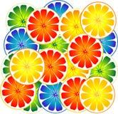 citrusfrukt vektor illustrationer
