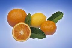 Citrusfrukt på ljus - blått Arkivfoto