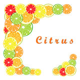 Citrusfruktapelsin stock illustrationer