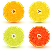citrusfrukter stock illustrationer